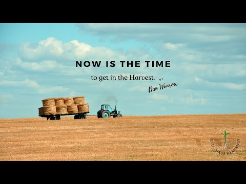 Dan Wunrow: Now is the time to get in on the Harvest / Jetzt ist die Zeit,